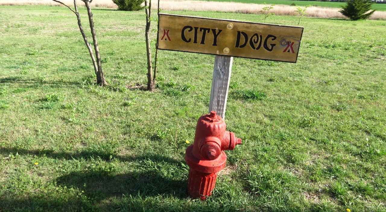 for City Dogs