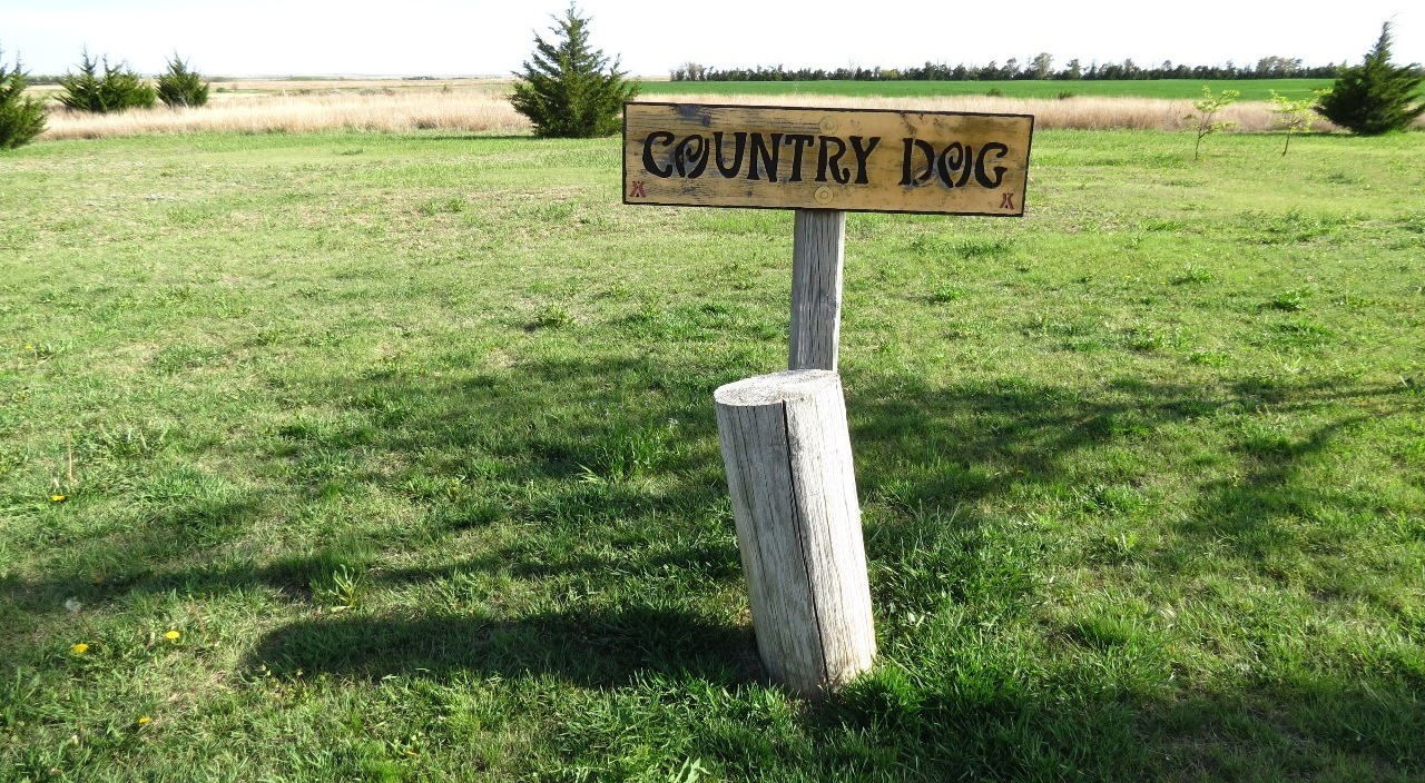 for Country Dogs