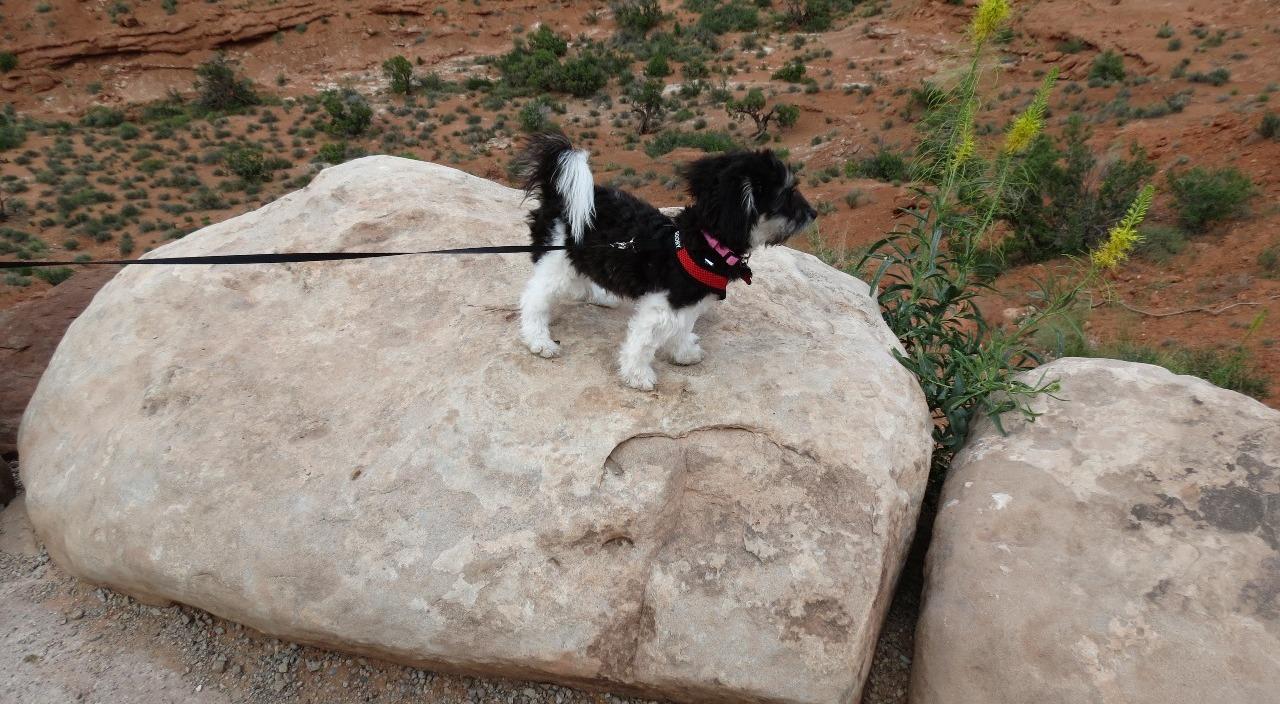 our rock climber