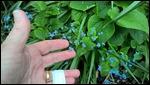 Tiny, tiny flowers