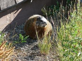 Een marmot!!