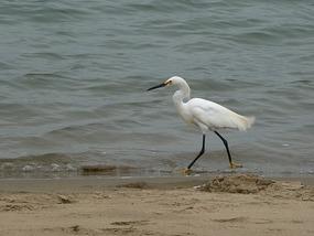 Gekke vogel met gele voeten