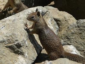 Eekhoorntje in Morro Bay