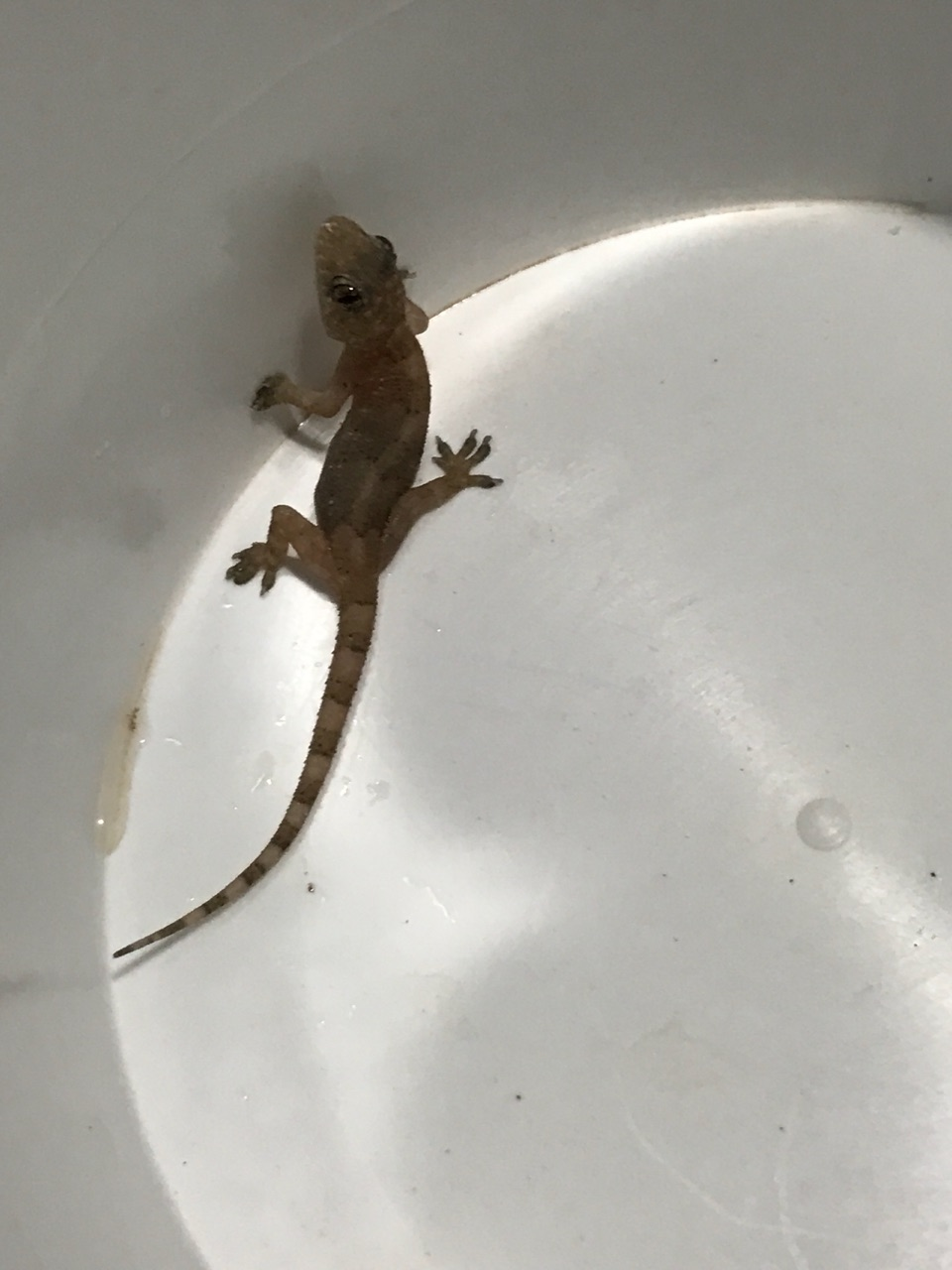 Found this one in the kitchen sink