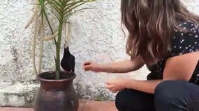 Feeding the wounded bird