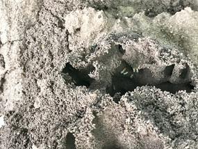 Baby ants