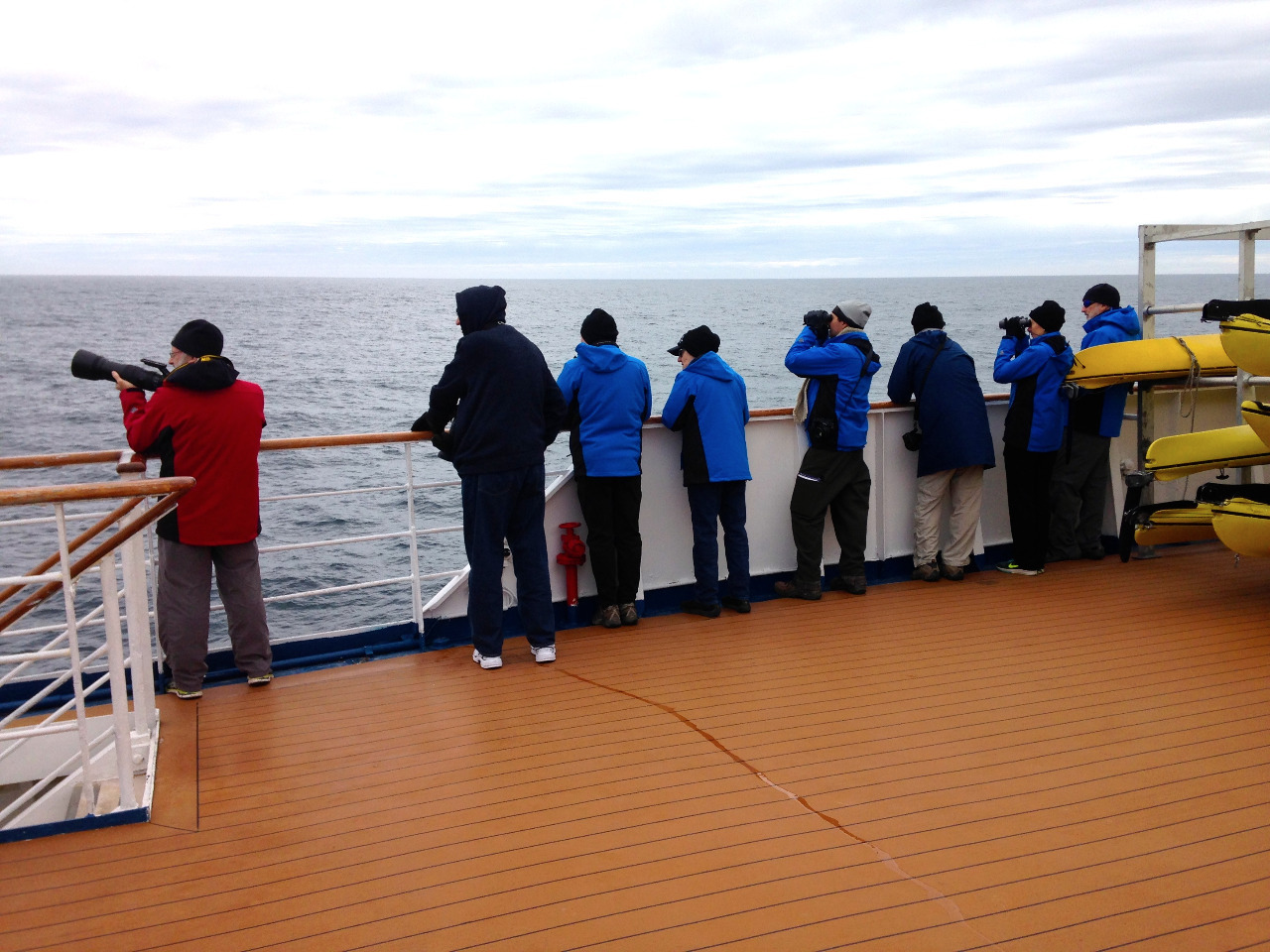 Typical At-Sea whale and bird watching