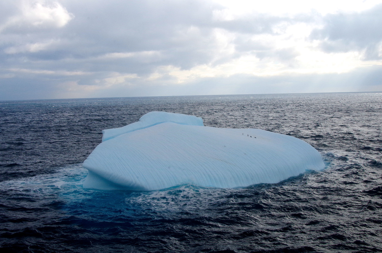 ICEBERG -- can you see the four Gentoo penguins..?