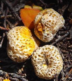 Darwin's Fruit