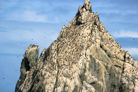 Shag Rocks: see the tiny dots (Shags) if you can..