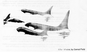 Killer Whales (Orcas): by Conrad Field...