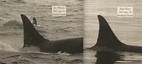 DAN OLSEN ORCAS-1