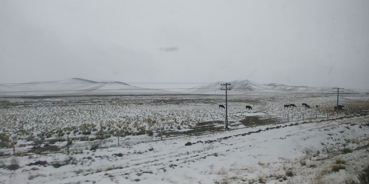 Last night's snow fall in Mongolia