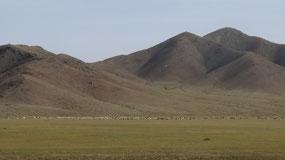 Central Mongolia landscape