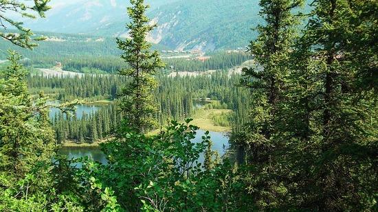 Denali--Horseshoe Lake trail view