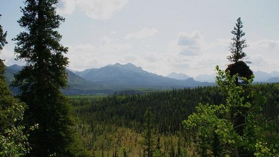 Denali--Meadow View Trail
