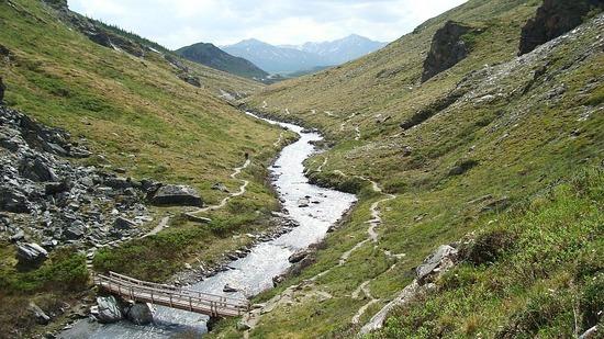 Denali--Savage River trail