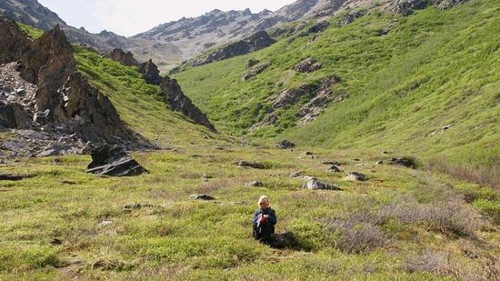 Denali--Savage River walk
