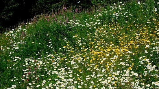 Alyeska RV hillside wildflowers