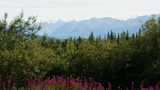 St. Elias Mtns