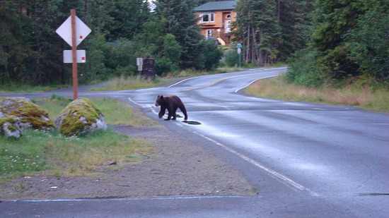 Black Bear - Mendenhall Campground