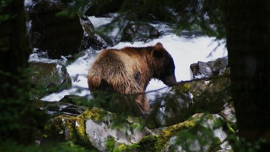 Raptor Center - Brown Bear Fishing