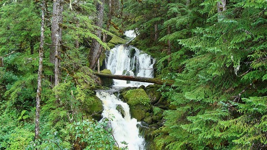 Forest Road Waterfall