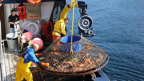 Tanner CrabTrap - Bearing Sea Fishermen's Tour