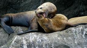 Seals--Kenai Fjords