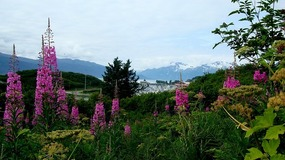 Dock Point Trail - Valdez Harbor