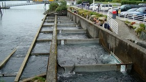 Macaulay Salmon Hatchery