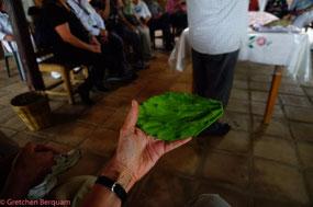 Lunch - Cactus Leaf