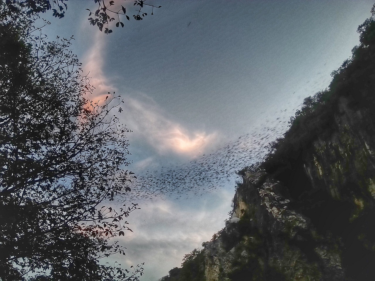 6 million bats leave this cave, every night!