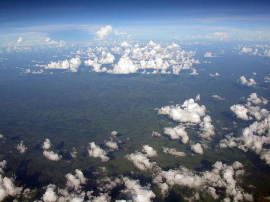 03 Congo Jungle