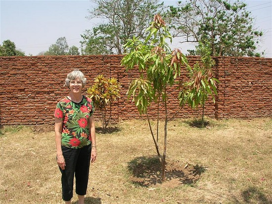 b Bev mango tree