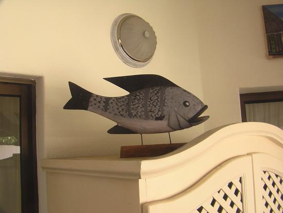 What a Chambo fish looks like