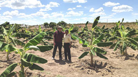 With Benedito on his banana plantation