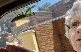 Saving the Praying Mantis's