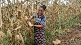 Chosiwe and maize